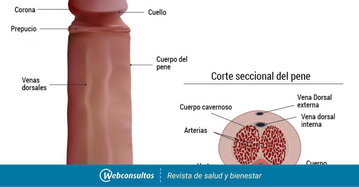 como detectar cancer de pene