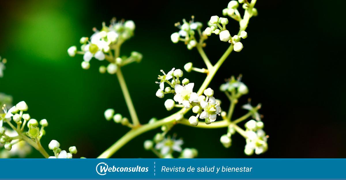 Una Planta Eficaz Contra El Cáncer De Páncreas Belleza Y Bienestar