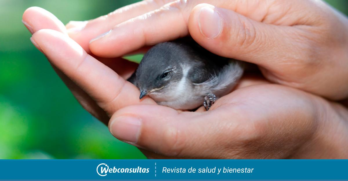 Cómo Actuar Si Encuentras Un Pájaro Herido Y Cómo Recogerle