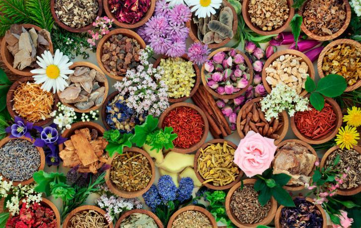 Resultado de imagen para imagenes de plantas medicinales