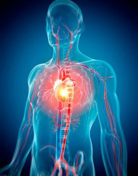 dd3d716081bab Enfermedades cardiovasculares  noticias y artículos