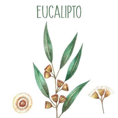 Eucalipto Para Respirar Mejor Propiedades Y Beneficios Para La Salud