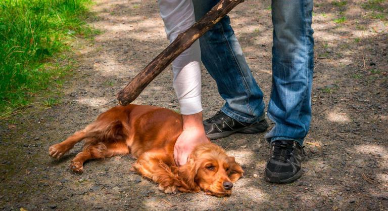 Resultado de imagen para maltrato animal