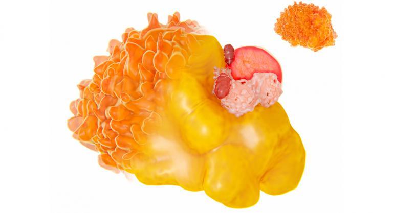 Célula de grasa