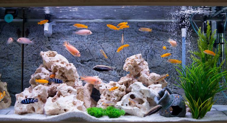 Limpieza Del Acuario Cómo Cuidar El Ecosistema De Tus Peces