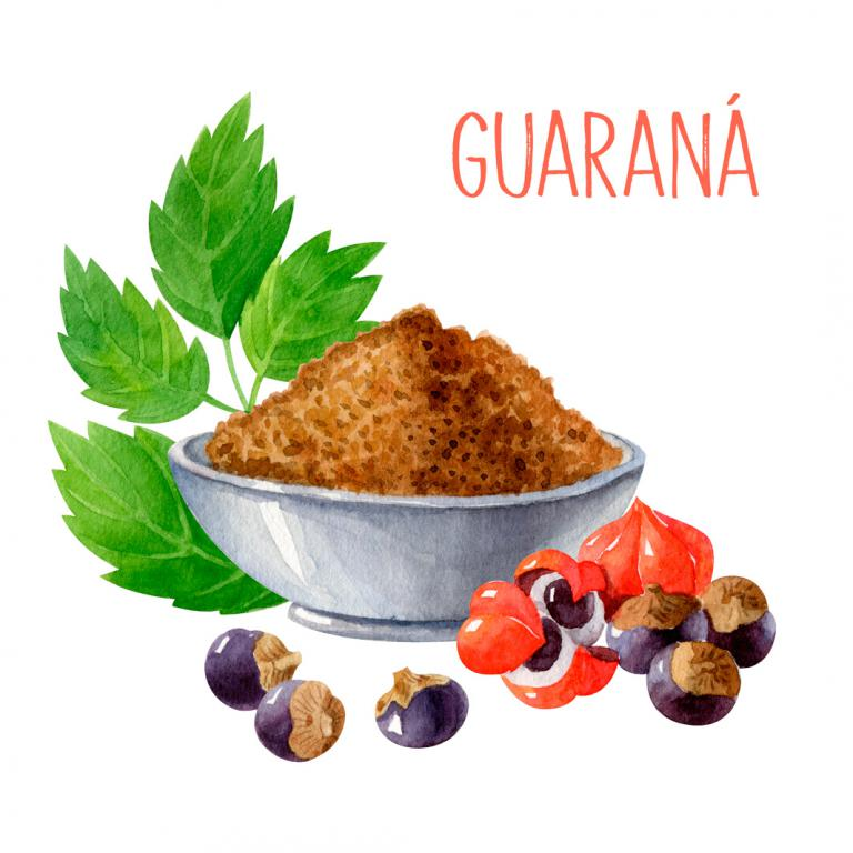 Guaraná planta