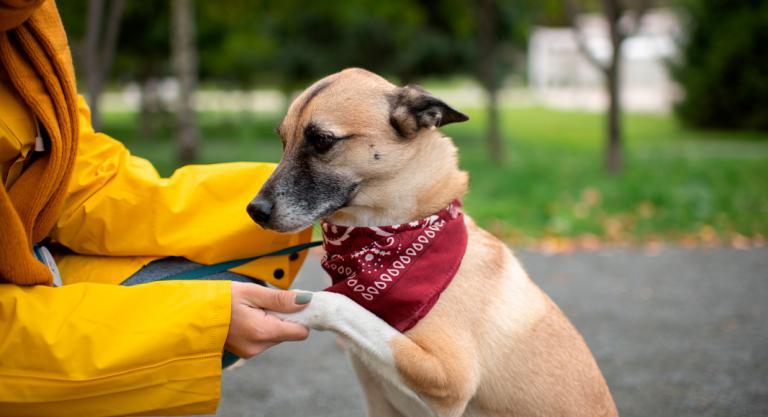 Adiestramiento canino en casa