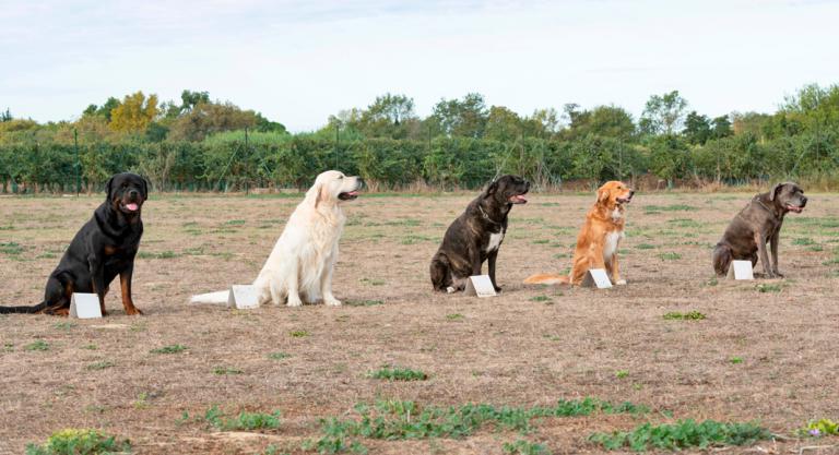 Experiencia del entrenador canino