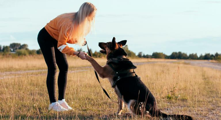 Método educativo del entrenador canino