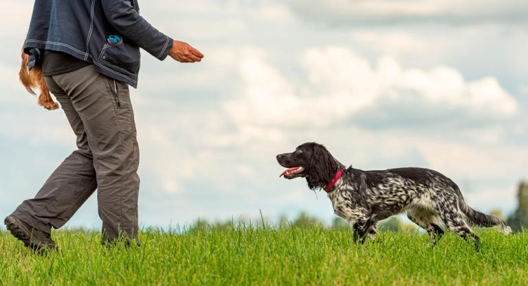 Impresión del entrenador canino