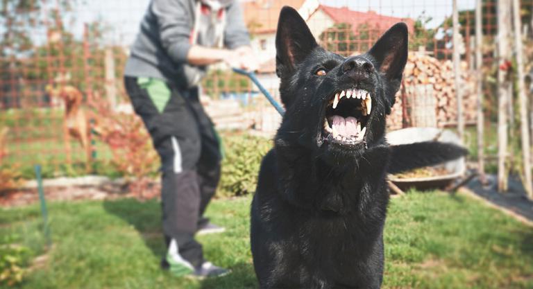 Perros agresivos entre sí