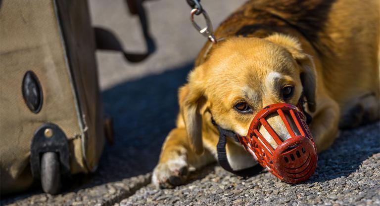Perro con bozal para viajar