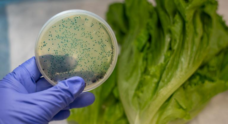 Az E coli parazita