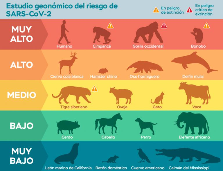 Tabla de animales vulnerables por SARS-CoV-2
