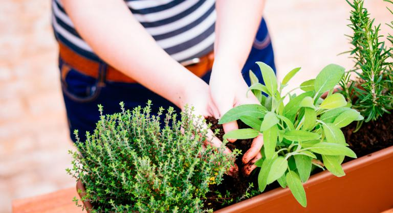 Plantas aromáticas