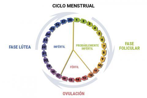 Calendario De Mis Dias Fertiles.Como Calcular Tus Dias Fertiles Para Buscar El Embarazo