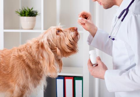 Resultado de imagen de cuidados perro