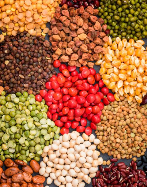 Cual es la funcion de las proteinas en la dieta
