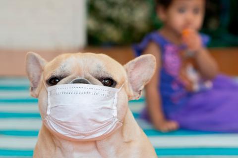 Actualidad: Confirmaron el primer caso de un perro con coronavirus