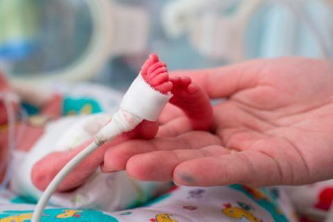 Primer Año Más Morir Prematuros Veces Riesgo El Vida Tienen 5 De Los 8Ok0wXNPn
