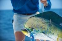 Nuevas especies de pescado